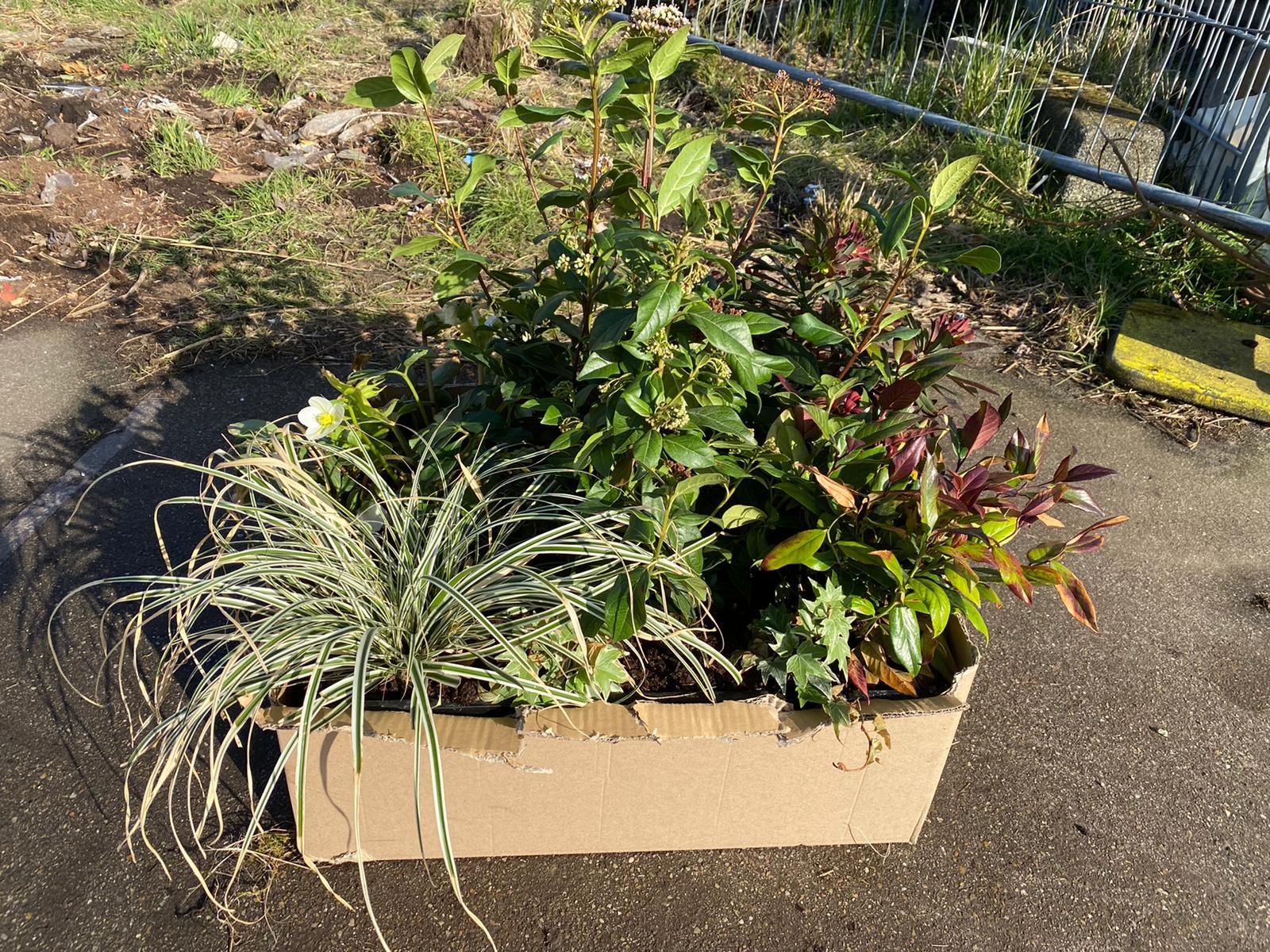 plantenpakket Tegels eruit, groen erin!